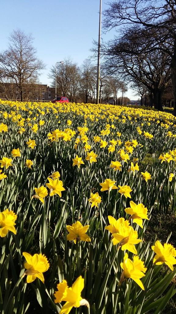 8 places to see spring flowers in aberdeen aberdeen city council spring flowers at north anderson drive mightylinksfo